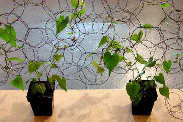 Необычная эстетика выращивания комнатных растений