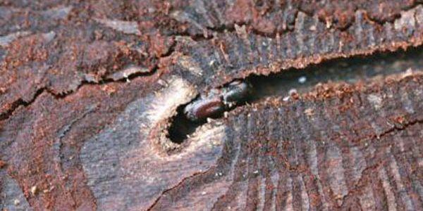 О жучках, жуках и жучилах