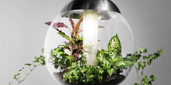 Свет и цветы в одном шаре Babylone