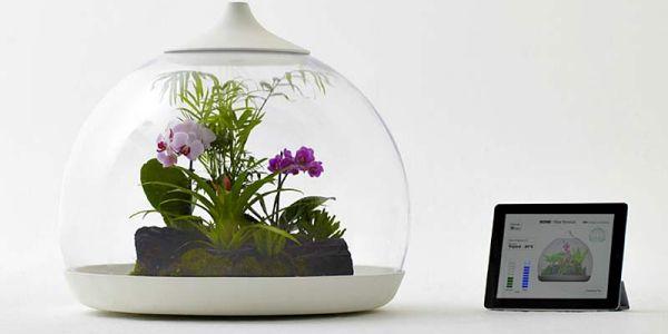 Управление биопроцессом природы для каждого — biom flora terrarium