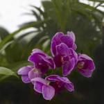 Управление биопроцессом природы для каждого — biom flora terrarium.